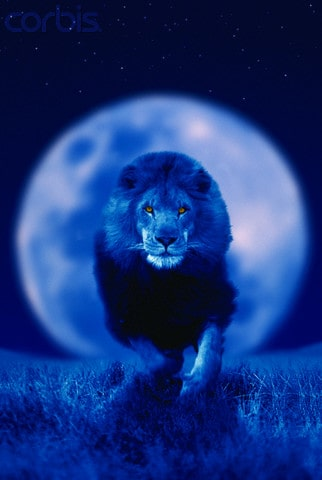 Running Male Lion and Moon --- Image by © Chase Swift/CORBIS